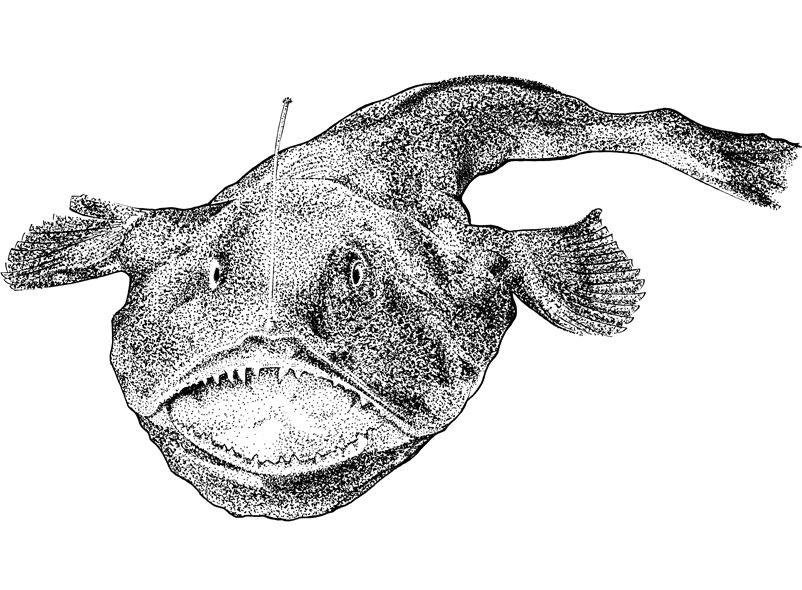 http://www.phillustrator.co.uk/files/gimgs/22_monkfish-black-web.png